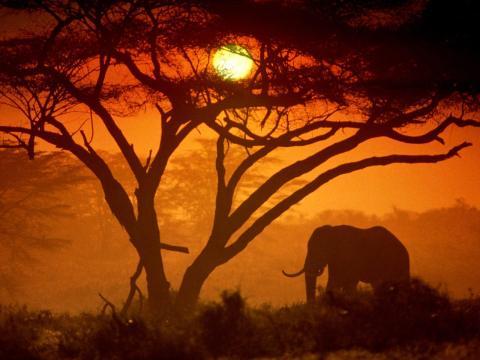 sunrise_kenya_33237-480x360